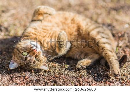 Cat Enjoying Spring Sun - stock photo