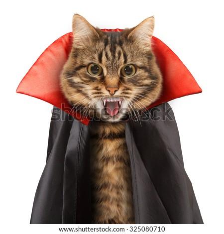 Cat evil on white background. Funny cat celebrates Halloween. - stock photo