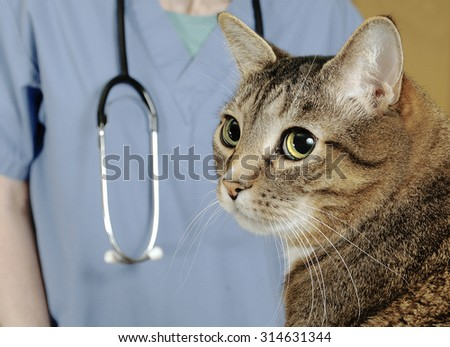 Cat examined by veterinarian  - stock photo