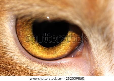 cat eye macro - stock photo