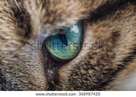Cat eye.Macro shoot of cat eye  - stock photo