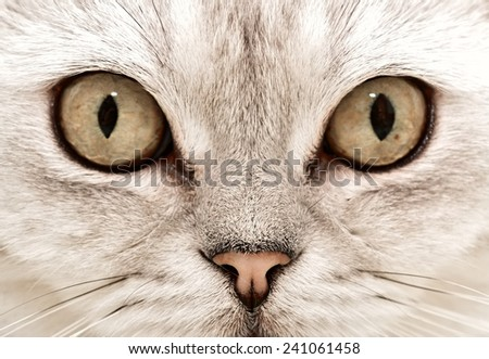 Cat Eyes - stock photo