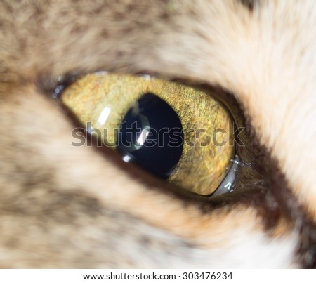 cat eyes. close - stock photo