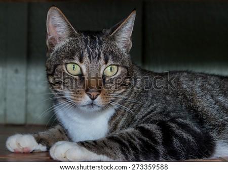 cat eyes close up portrait - stock photo