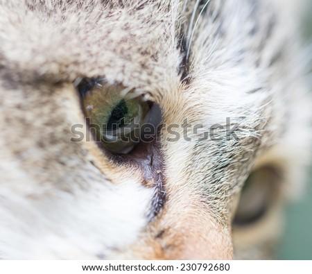 cat eyes. macro - stock photo