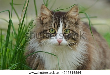 Cat Face, Cat looking - stock photo