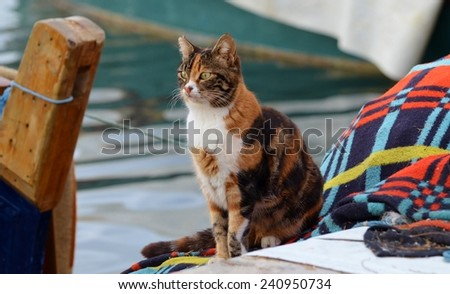 Cat Face, Cat Standing, Water, soft focus - stock photo