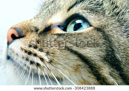 Cat face close up - stock photo