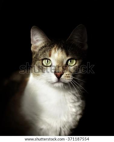 cat face on black background - stock photo