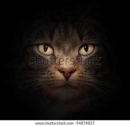 Cat face with beautiful eyes close up portrait - stock photo