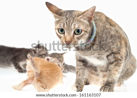 Cat family on white background