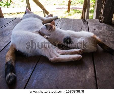 Cat feeding a kitten - stock photo