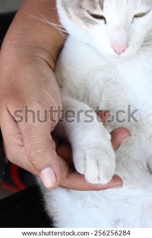Cat feet - stock photo