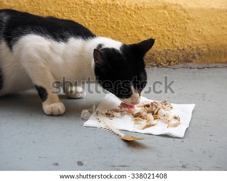 Cat finishing a fish dinner