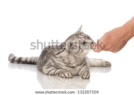 Cat food gets out of hand - stock photo