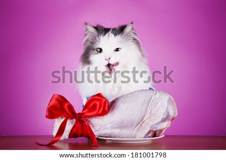 cat foot dines on a pink background