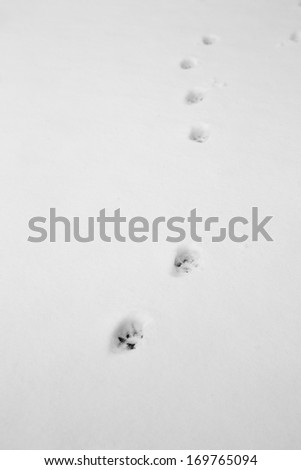 cat footprints in the snow - stock photo