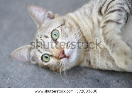 cat funny on the road in home - stock photo