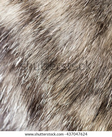 cat fur as background. texture - stock photo