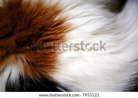 cat fur background - stock photo