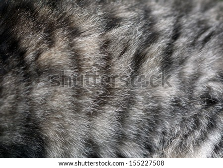 Cat fur texture - stock photo