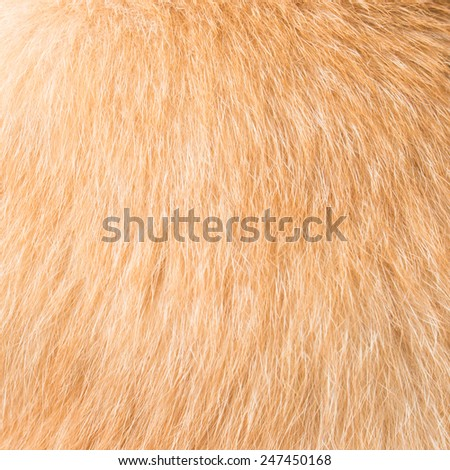 cat fur texture close-up - stock photo