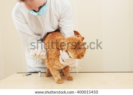 Cat getting a vaccine at the veterinary clinic. - stock photo
