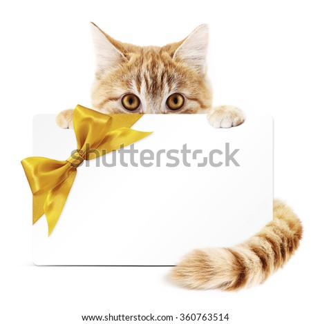 cat gift card with golden ribbon bow Isolated on white background - stock photo