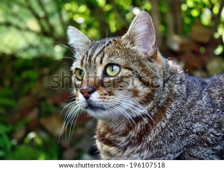 Cat gray striped looking with green eyes - stock photo