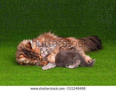 Cat grooming her kitten on artificial green grass - stock photo