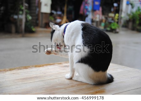 Cat grooms its paw while sitting on table near a road. - stock photo