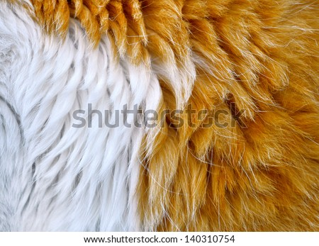 cat hair - stock photo