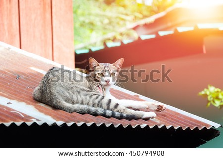 Cat have a wound on hot tin roof