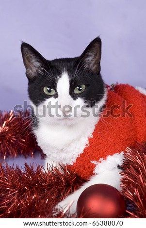 cat having fun with christmas stuff