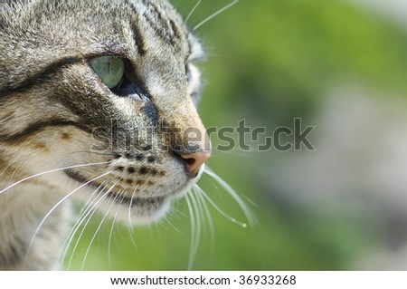 cat head over green background - stock photo