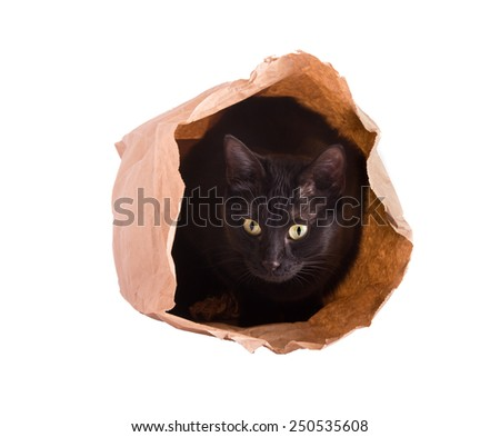 Cat hiding in a brown paper bag, isolated on white - stock photo
