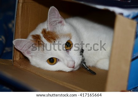 Cat hiding in paper box