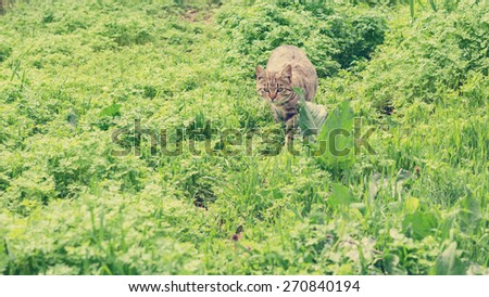 Cat hiding in the grass. The image is tinted and selective focus. - stock photo