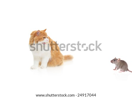 Cat hissing at a mouse isolated against white background - stock photo