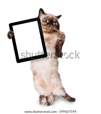 cat holding a blank tablet - stock photo
