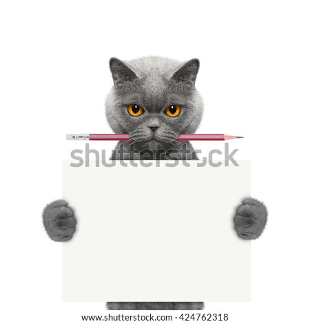 cat holding a pencil and blank -- isolated on white - stock photo