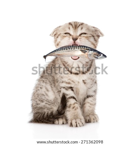 Cat holding fish in its mouth. isolated on white background - stock photo