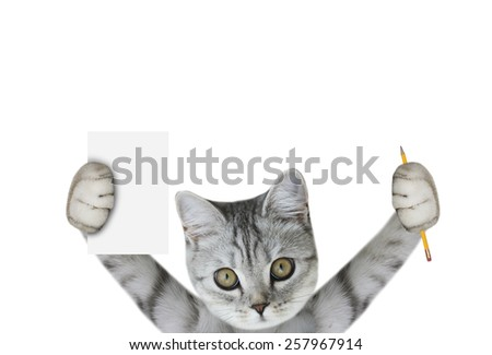 cat holding pencil and paper - stock photo
