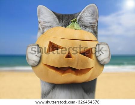 cat holding pumpkin - stock photo