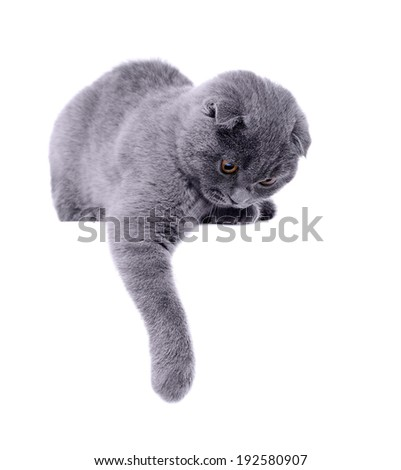 cat holding the paw on blank board looking down