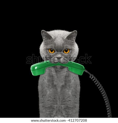 cat holds the phone in its mouth -- isolated on black - stock photo