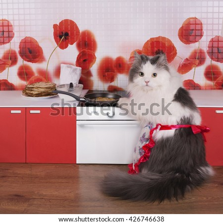 cat housewife preparing pancakes in a small kitchen - stock photo
