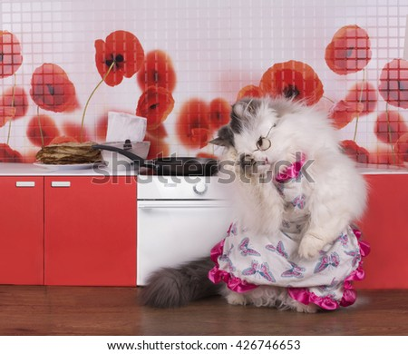 cat housewife preparing pancakes in a small kitchen