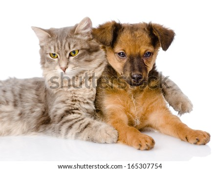 cat hugging puppy, isolated on white background - stock photo