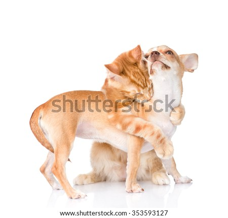Cat hugs and bites puppy. isolated on white background